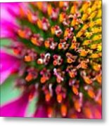 Up Close With A Cone Flower Metal Print