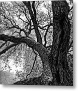 Up Tree Metal Print