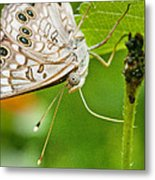 Upclose Moth_1 Metal Print by Lisa  Spencer