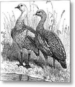Upland Geese Metal Print