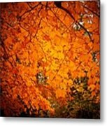 Upperville Leaves Metal Print