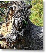 Uprooted By The Storm Metal Print