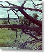 Uprooted Metal Print