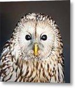 Ural Owl Metal Print by Tom Gowanlock