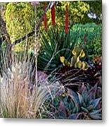 Urban Garden With Cactus Metal Print