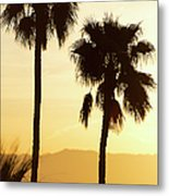 Usa, California, Palm Springs, Palm Trees Silhouetted At Sunset Metal Print