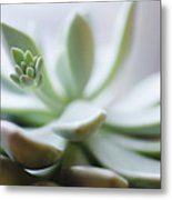 Usa, New Jersey, Jersey City, Close-up Of Succulent Plant Metal Print