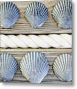 Usa, New York State, New York City, Brooklyn, Collection Of Seashells Metal Print