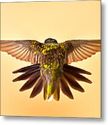 Usaf Hummingbirds Wings Metal Print