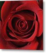 Valentine Rose - Color Metal Print
