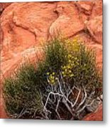 Valley Of Fire Yellow Vegetation Nevada Metal Print