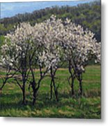 Valley Plum Thicket Metal Print