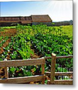 Vegetable Farm Metal Print by Carlos Caetano