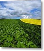 Vegetables, Cabbages Metal Print