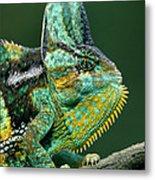 Veiled Chameleon Chamaeleo Calyptratus Metal Print