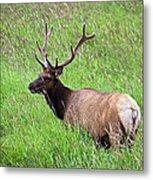 Velvet Bull Elk Metal Print