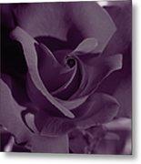 Velvet Rose Metal Print by Aidan Moran