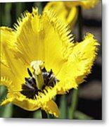 Venus Flytrap Tulip Metal Print