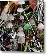 Very Tull Mushrooms Metal Print