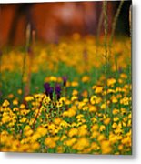 Vesuvius Wildflowers Metal Print