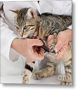 Vet Clipping Kittens Claws Metal Print