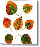 Vibrant Autumn Leaves Metal Print