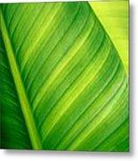 Vibrant Green Leaf Metal Print