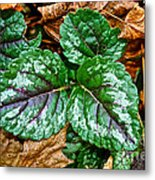 Vibrant Ground Cover  Metal Print
