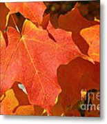 Vibrant Maple Metal Print