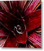 Vibrant Succulent  Macro Metal Print