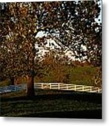 View Of A Large Sycamore Tree And White Metal Print