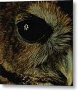 View Of A Northern Spotted Owl Strix Metal Print by Joel Sartore