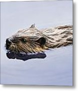 View Of Beaver, Chaudiere-appalaches Metal Print