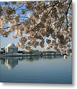View Of Cherry Blossoms Metal Print
