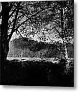 View Through The Trees Metal Print