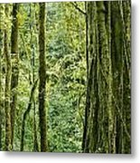 View Within A Rain Forest Metal Print