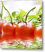 Vine Tomatoes And Salad With Water Metal Print