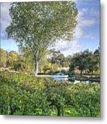 Vines And Trees Metal Print