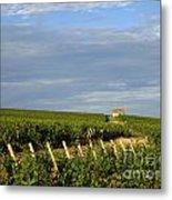 Vines In Burgundy. France Metal Print