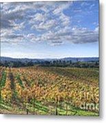 Vines In Fields Metal Print