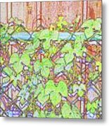 Vines On A Fence Metal Print