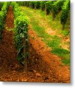 Vineyard In Burgundy France Metal Print