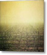 Vineyard In Mist Metal Print