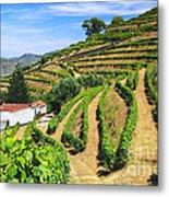 Vineyard Landscape Metal Print