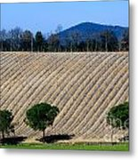 Vineyard On A Hill With Trees Metal Print