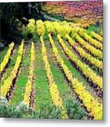 Vineyard Sonoma 7 Metal Print