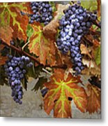 Vineyard Splendor Metal Print