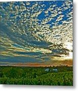 Vineyard Sunset I Metal Print