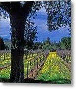 Vineyard View Metal Print by Kathy Yates