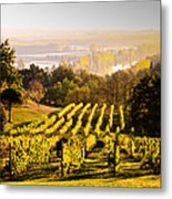 Vineyard Metal Print by Voisin and Phanie and Photo Researchers